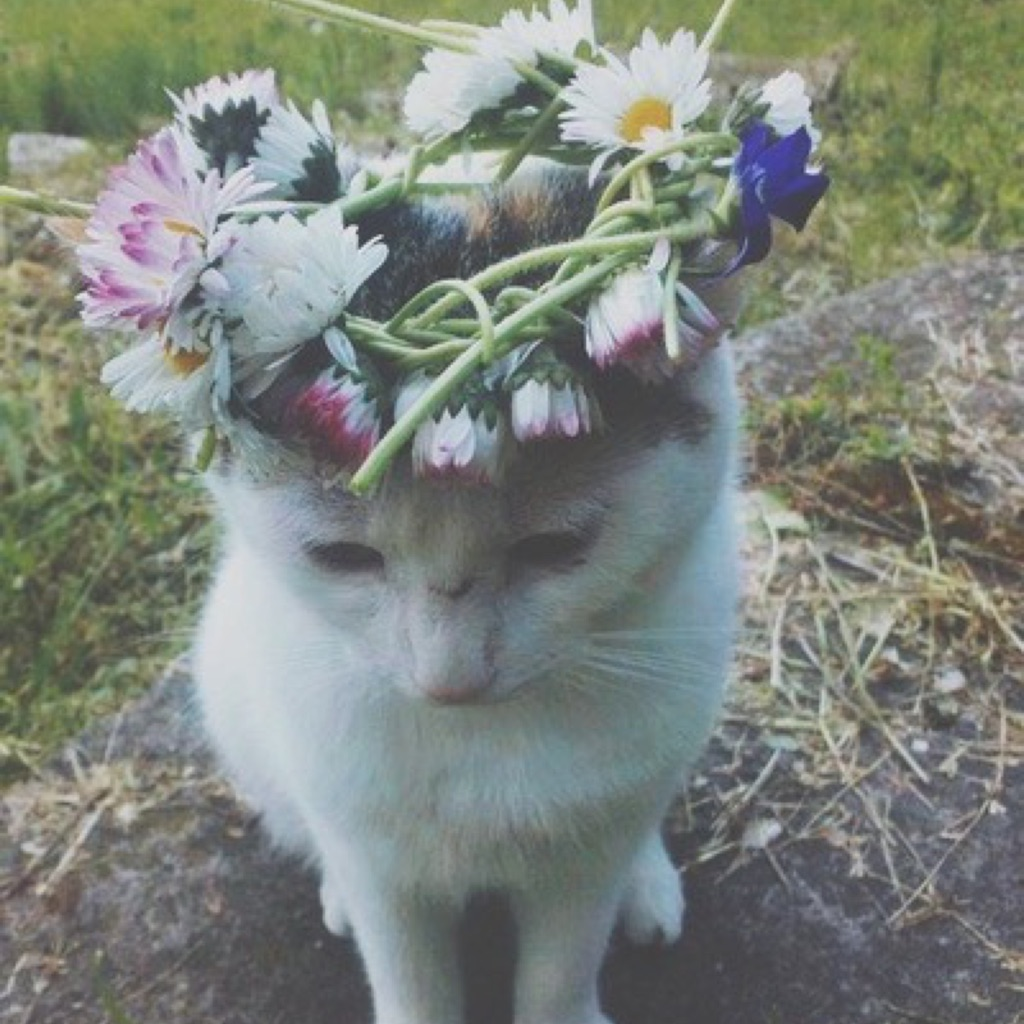 Фото кота с цветами на голове