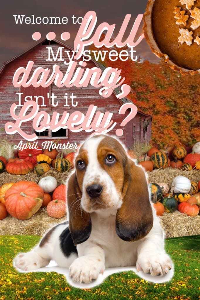 Welcome Fall!  QOTC- what is your favorite part of fall? Tags: pconly, Pic Collage, dogs, fall, pumpkins, pie, fall colors!