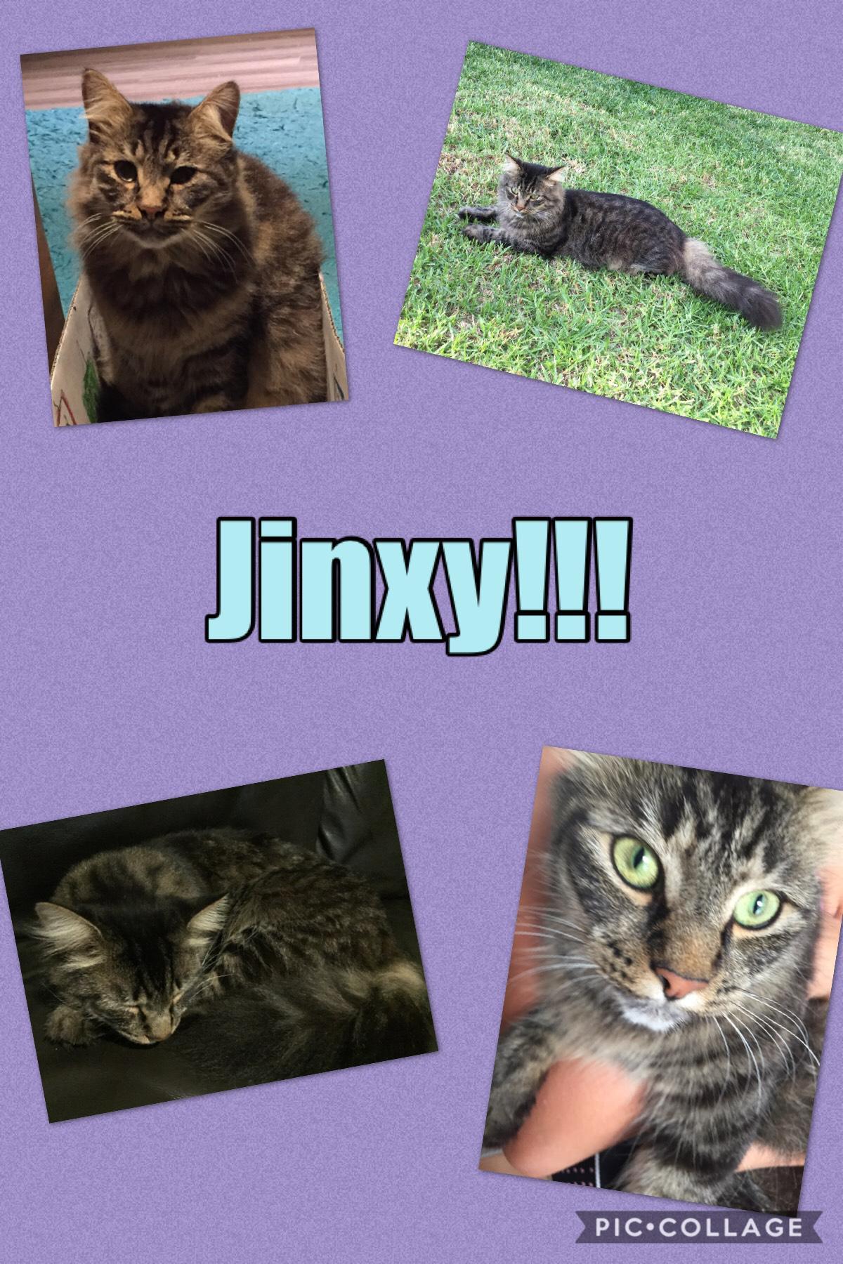 Jinxy 😻😻😻