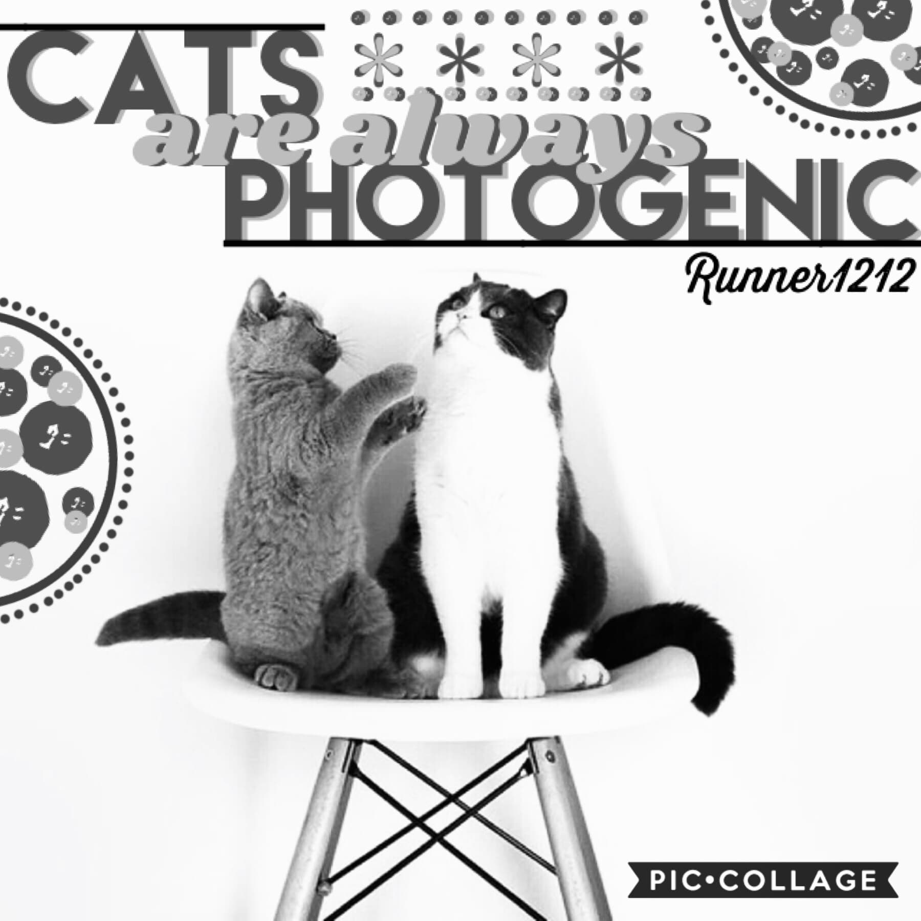 Tap! This was entered a battle of collagers for Golden-vibe's account! The task was to make a black and white collage! It was actually really fun and I'm glad to see it turned out okay! Have a nice day! 7/20/20 😁