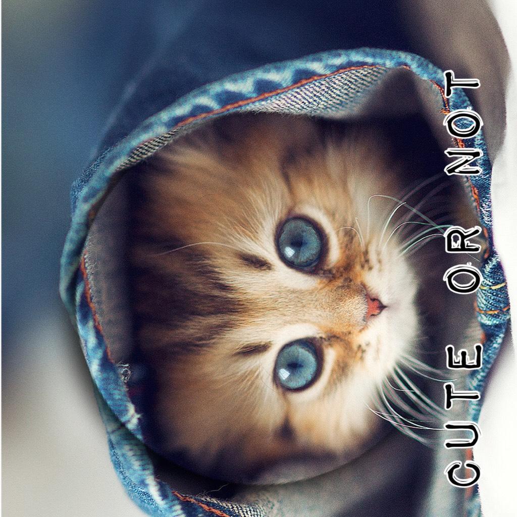 Cute or Not I say yessssssss!!!!!