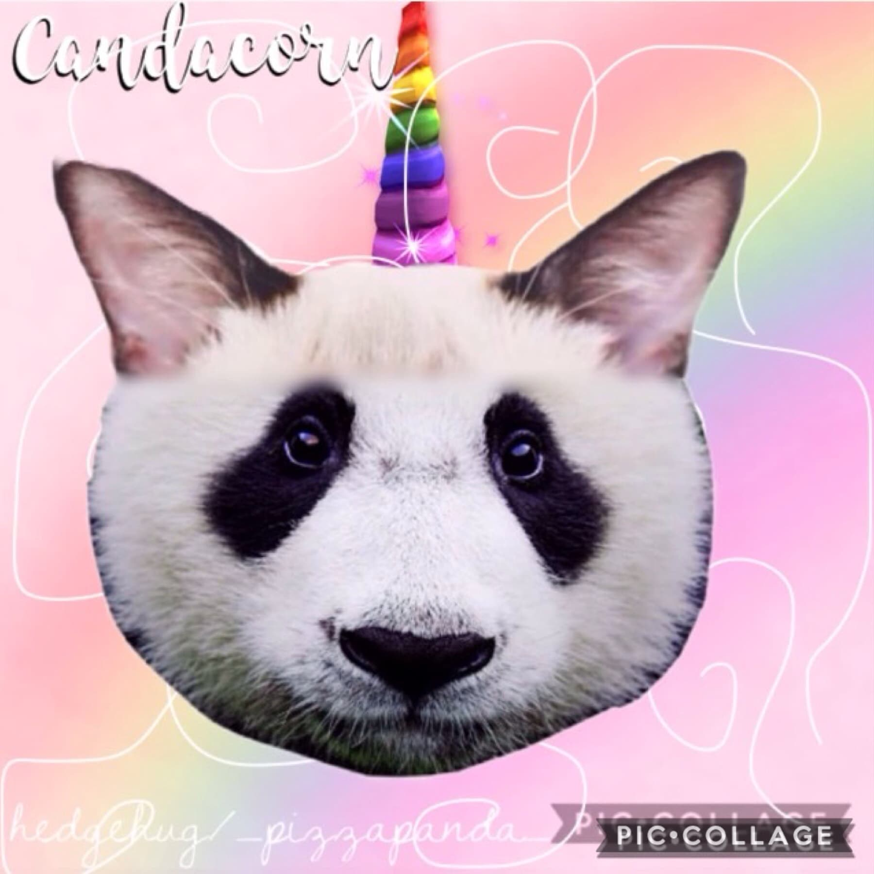 Hi people. I made this like a really long time ago with the awesome hedgehug! It's a combination of cat+panda+unicorn! Cont. in comments