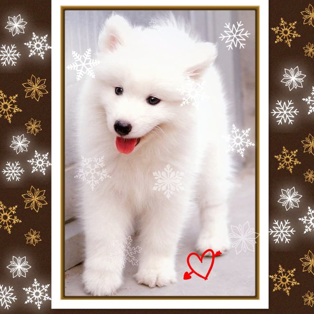 This is an adorable puppy and his hair is super soft and cute❣️🐶☁️❄️