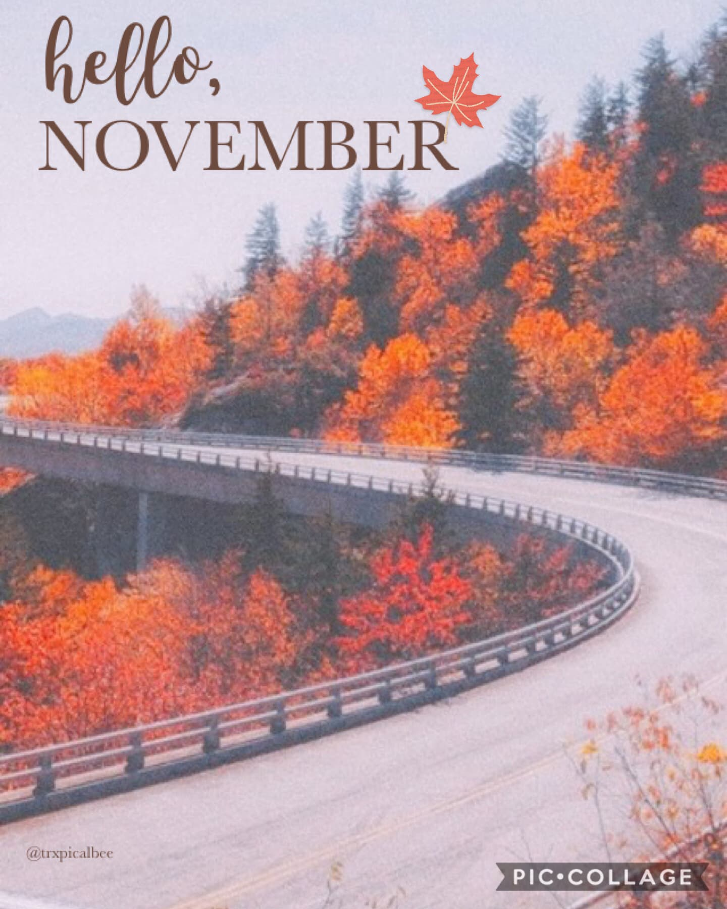 hello, november! 🍂 it's almost christmas! :))  [looks like i'm back for a bit! ✨]