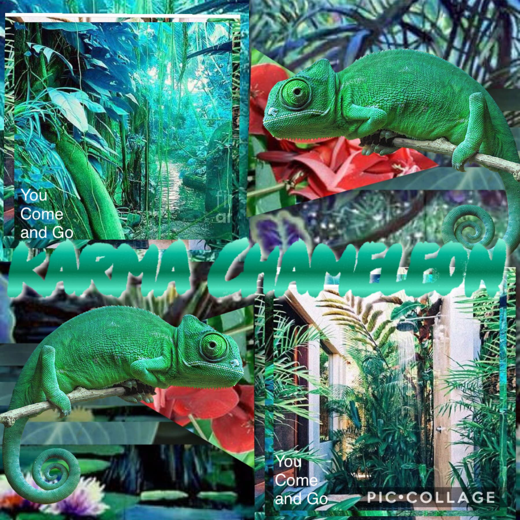 Karma Chameleon collage! 🦎  Btw, I will be posting some VERY overdue stuff soon(cause I'm bad at running this account!)!