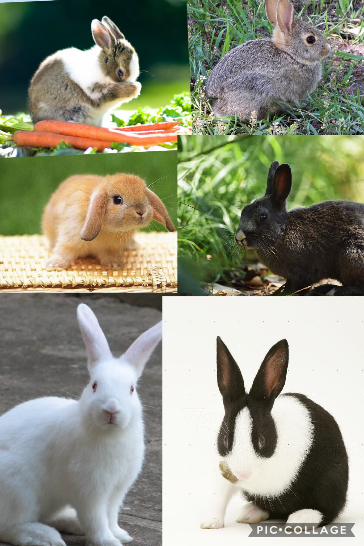 I saw a very cute bunny today that looks like the first picture which one do you think is the cutest ?