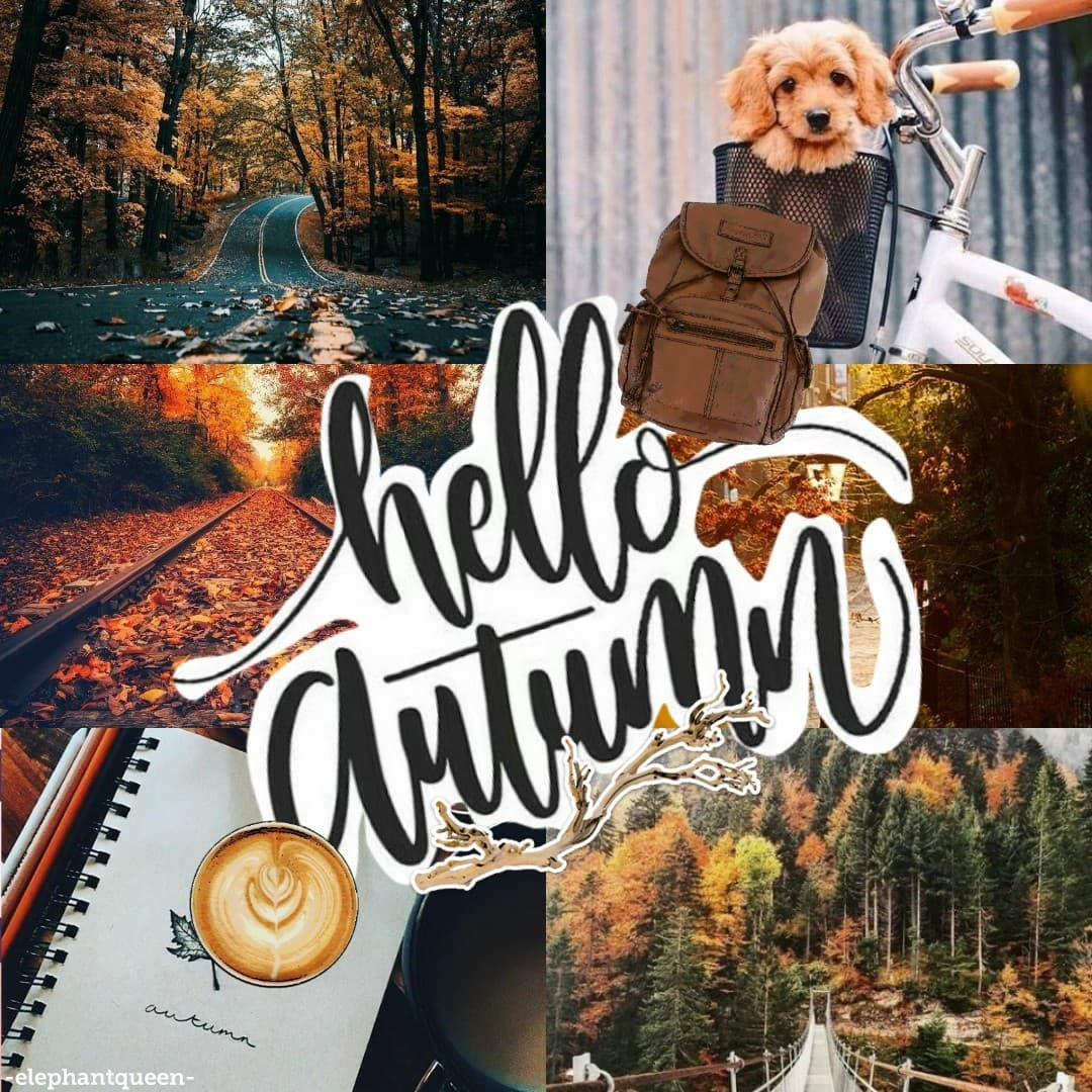 happy autumn🍁 || tap hey this is kinda late but oh well 🤷🏼✨ anyways hope you all have a good time at school for those going back !! (haha like anyone enjoys school the only reason I'm going bc it's the law 😂) pconly 🍁✨