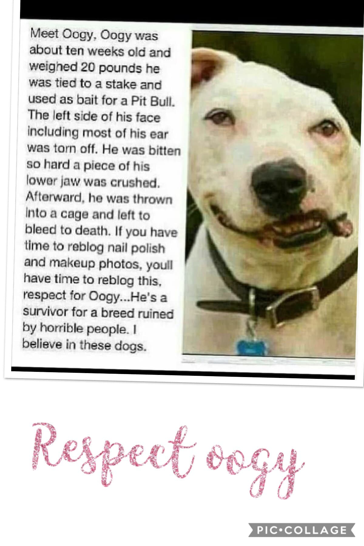 If you don't repost this on your page you are a horrible person and your a dog hater