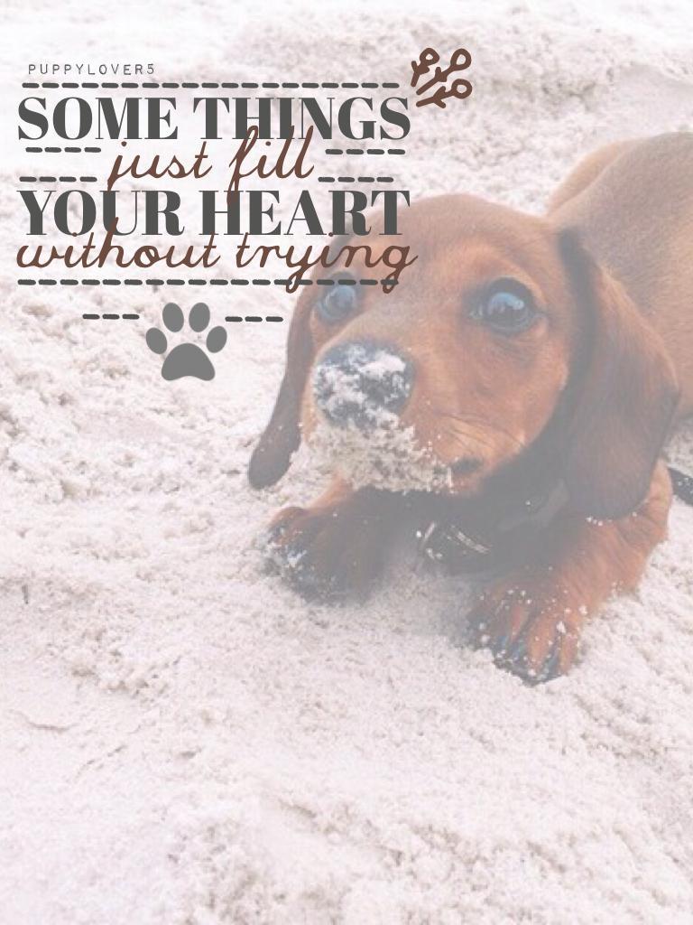 Rate? I LOVE DOGS SOOOOO MUCH!!!😂🐶