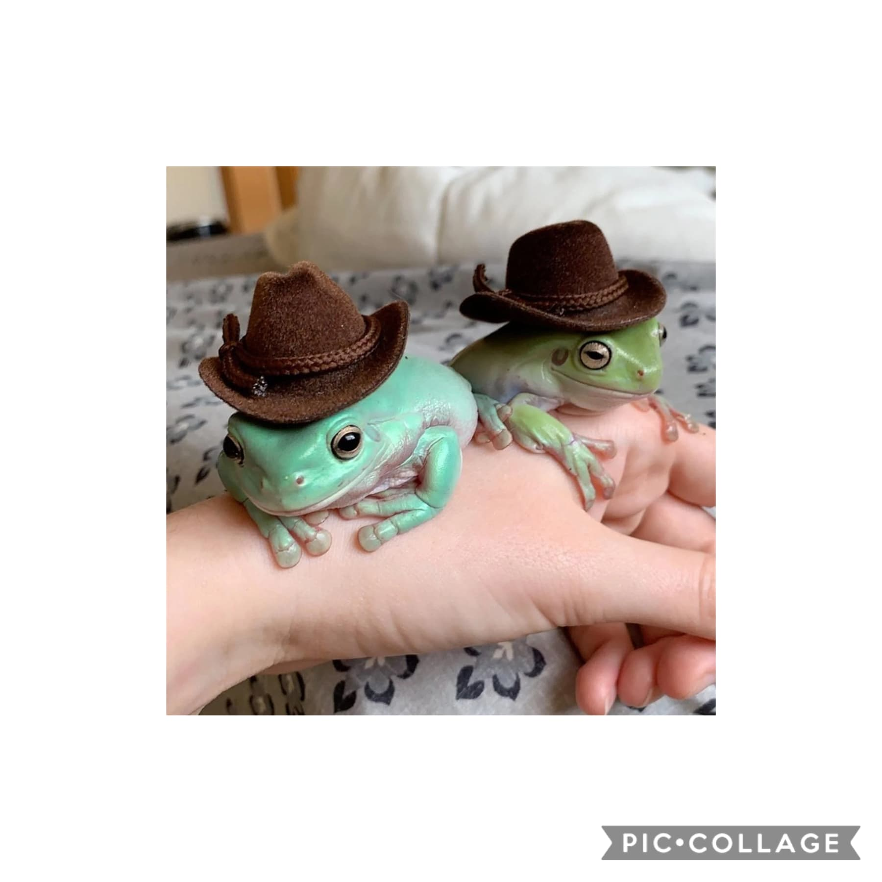 handsome lil cowboys   I played Minecraft with Friend Boy n some of his friends n it was a blast ngl They were joking about him and I simping for each other n we both just went ??? externally  I mean they're right abt me but- 👀