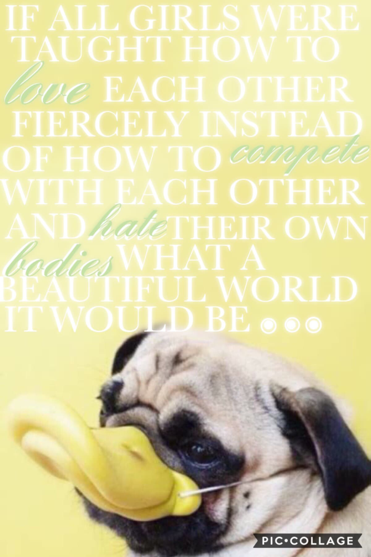 Inspired by the beautiful @abstract!! I love this quote sooo much omg 💗💗 and the pug is adorable !!