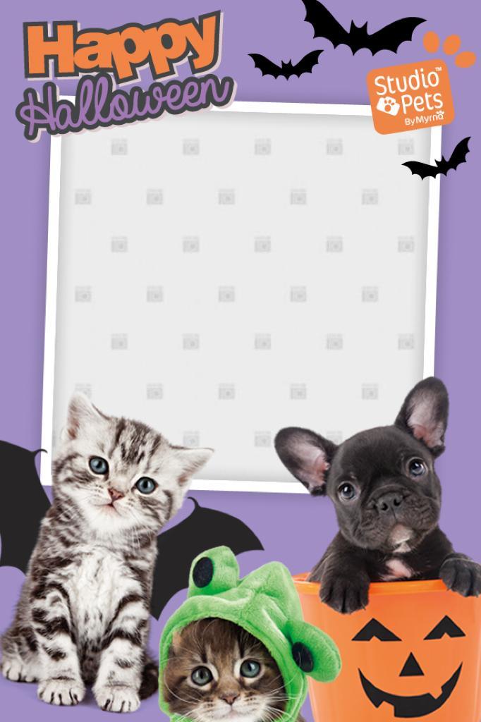 Studio Pets Campaign