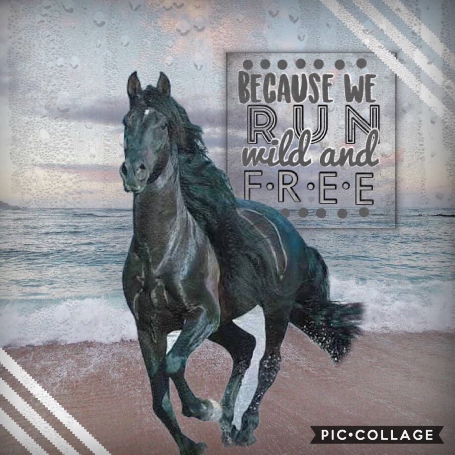My entry to a contest! The picture reminds me of The Black Stallion. It's a super good book and movie you should watch or read it!