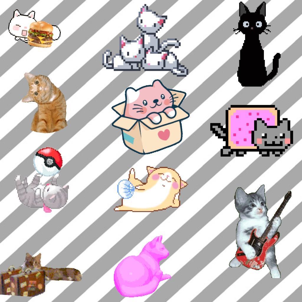 Meow 😻😂😻😂