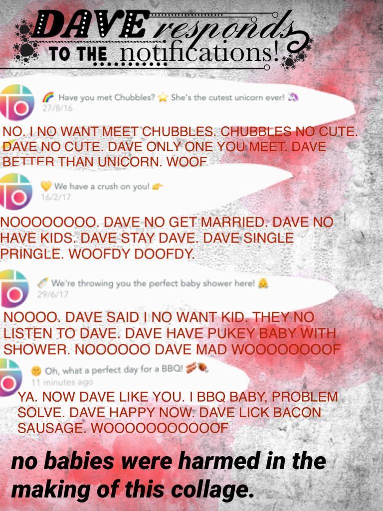 I IS RESPOND TO CREEPY MESSAGE FROM RAINBOW PERSON. DAVE IS SCARED BUT DANCE WHEN BBQ ONE ON. YAAAAYAAAA WOOOOOOOOOF.