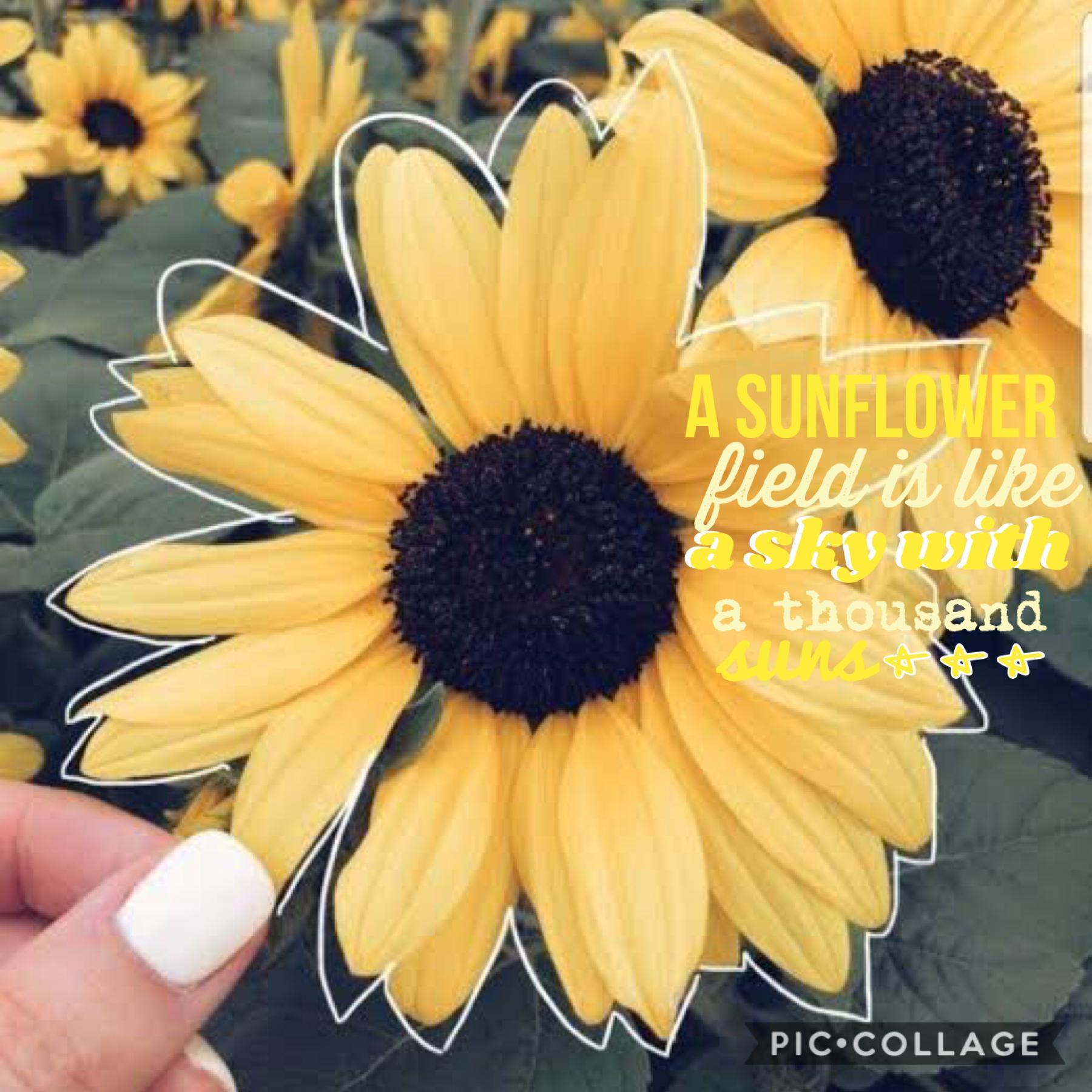 """I love sunflowers 🌻QOTD: Favourite flower """"A sunflower is like a sky with a thousand suns"""""""
