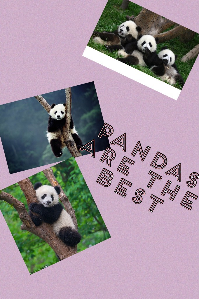 Lol pandas rock the world