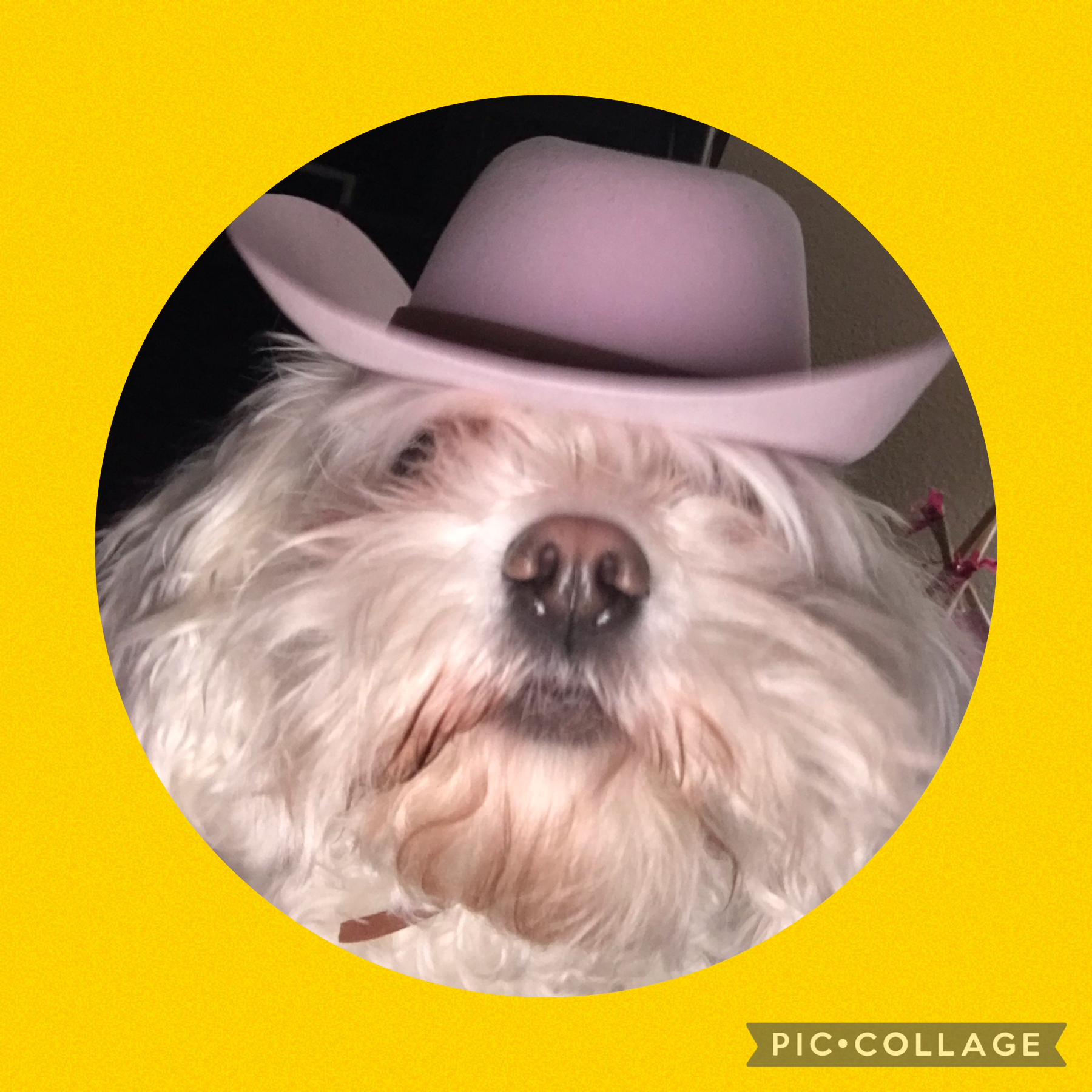 This is Holly, my mom's dog. She decided to take my phone without my knowing and take a selfie with a cowgirl hat on😂