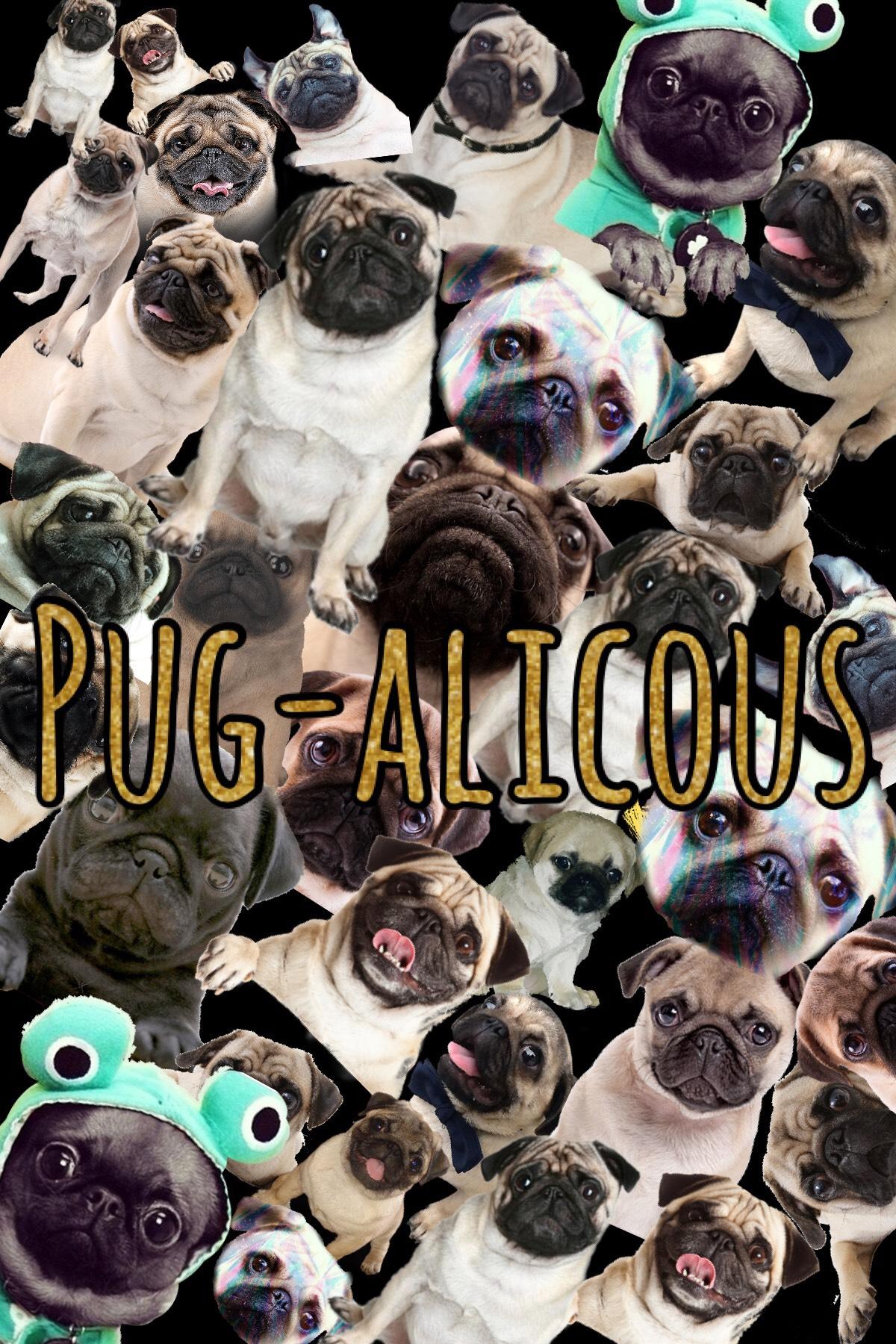 Tap Pug-alicous