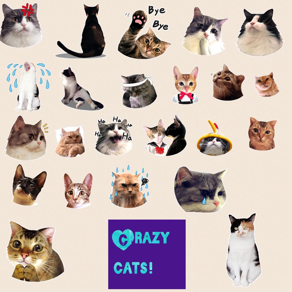 Crazy cats!