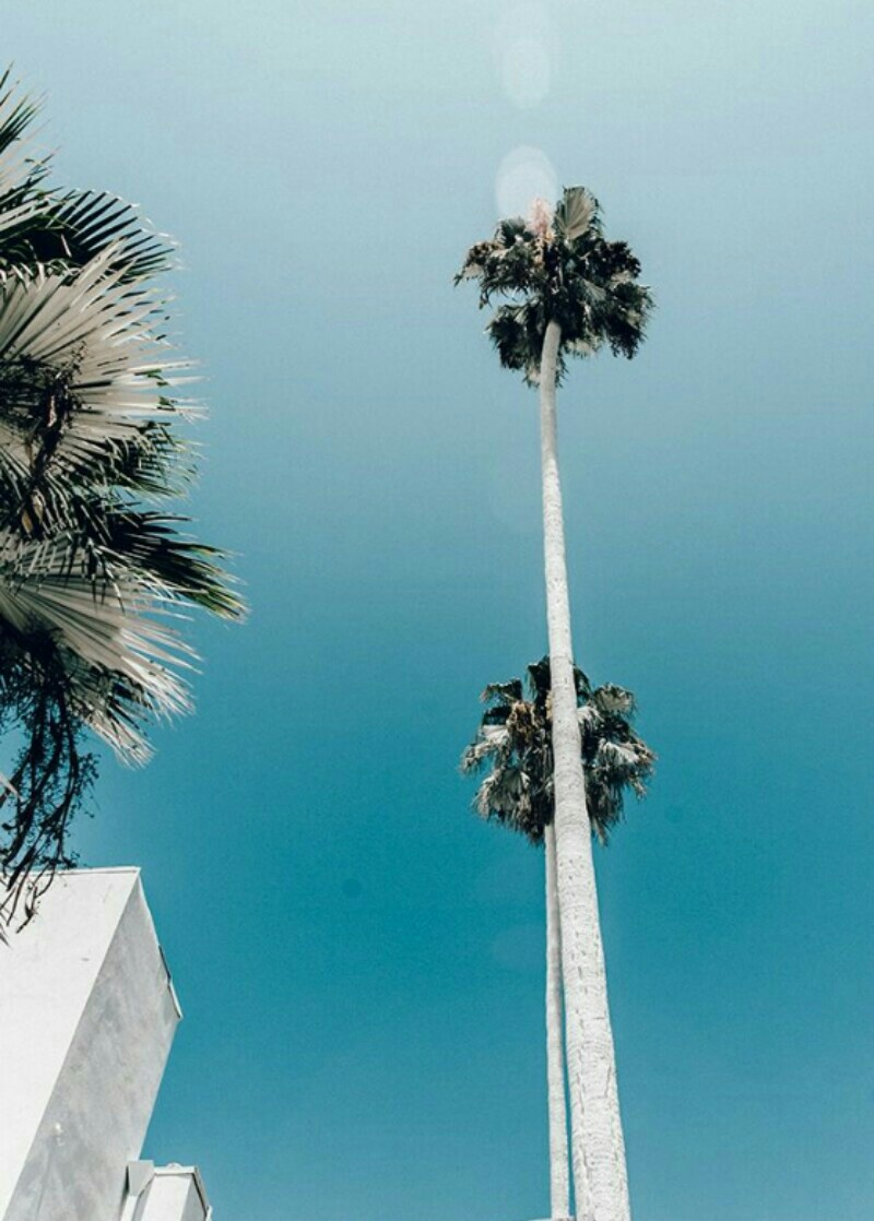 (TAP) Enjoy Every Little Moment💖🍍#California_Life🍍Beautiful Theme🍍💖😍🌿