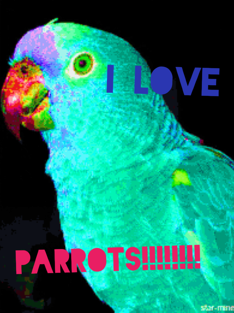 I have parakeets of my own