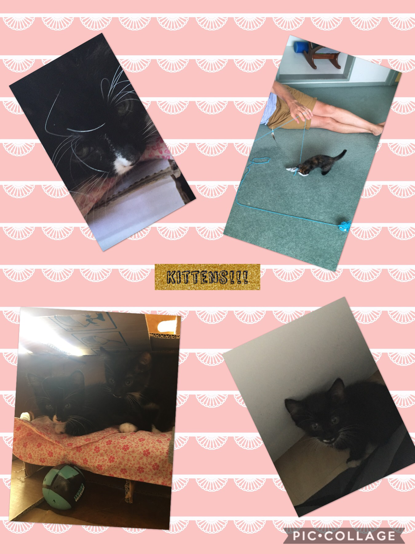I actually got them last week but I never had time to make a pic collage! 😁😽plz follow btw!