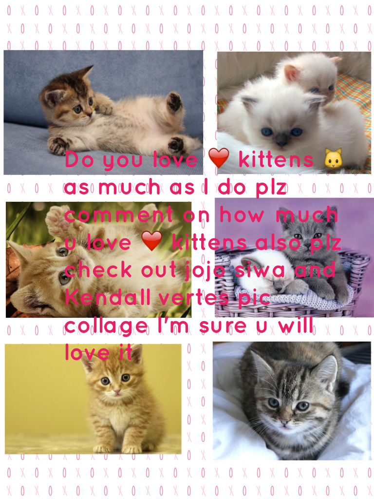 Do you love ❤️ kittens 🐱 as much as I do plz comment on how much u love ❤️ kittens also plz check out jojo siwa and Kendall vertes pic collage I'm sure u will love it