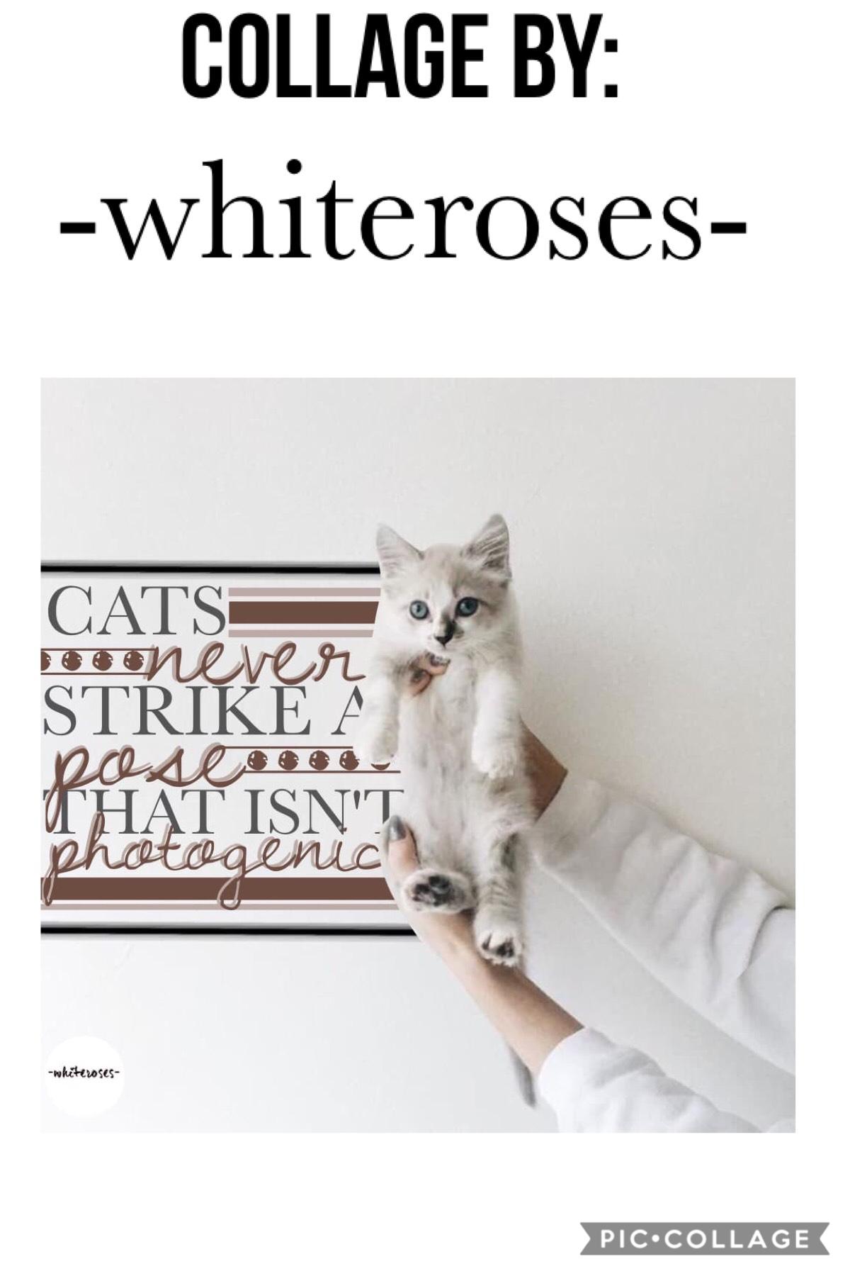 Mini Feature#9: -whiteroses-