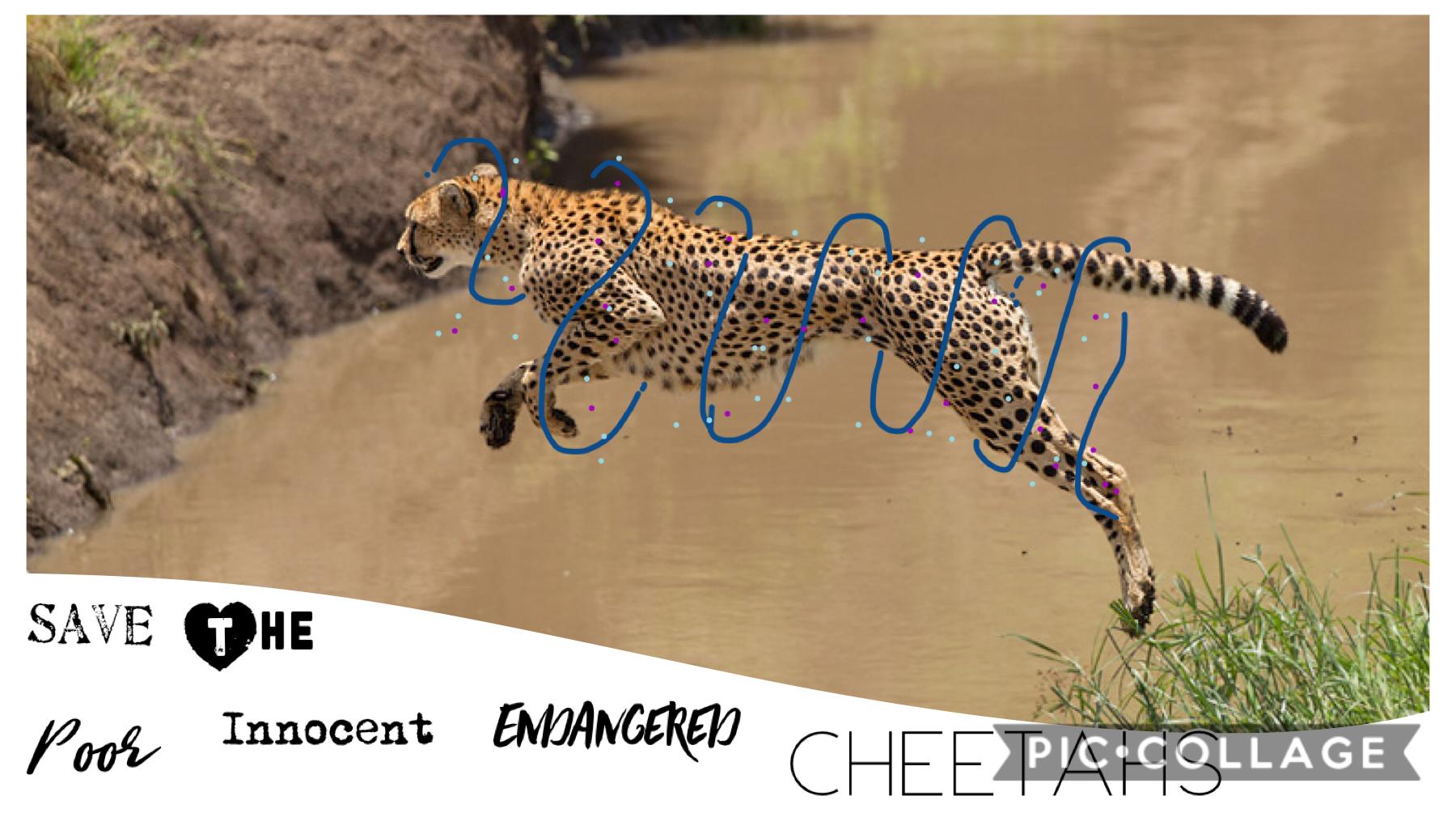 Save the cheetahs people!