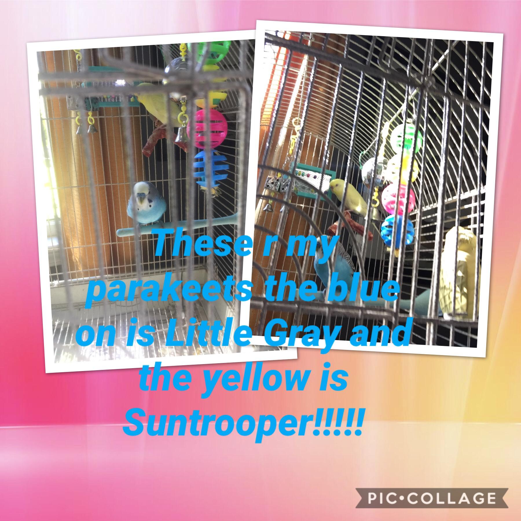 My pet parakeets