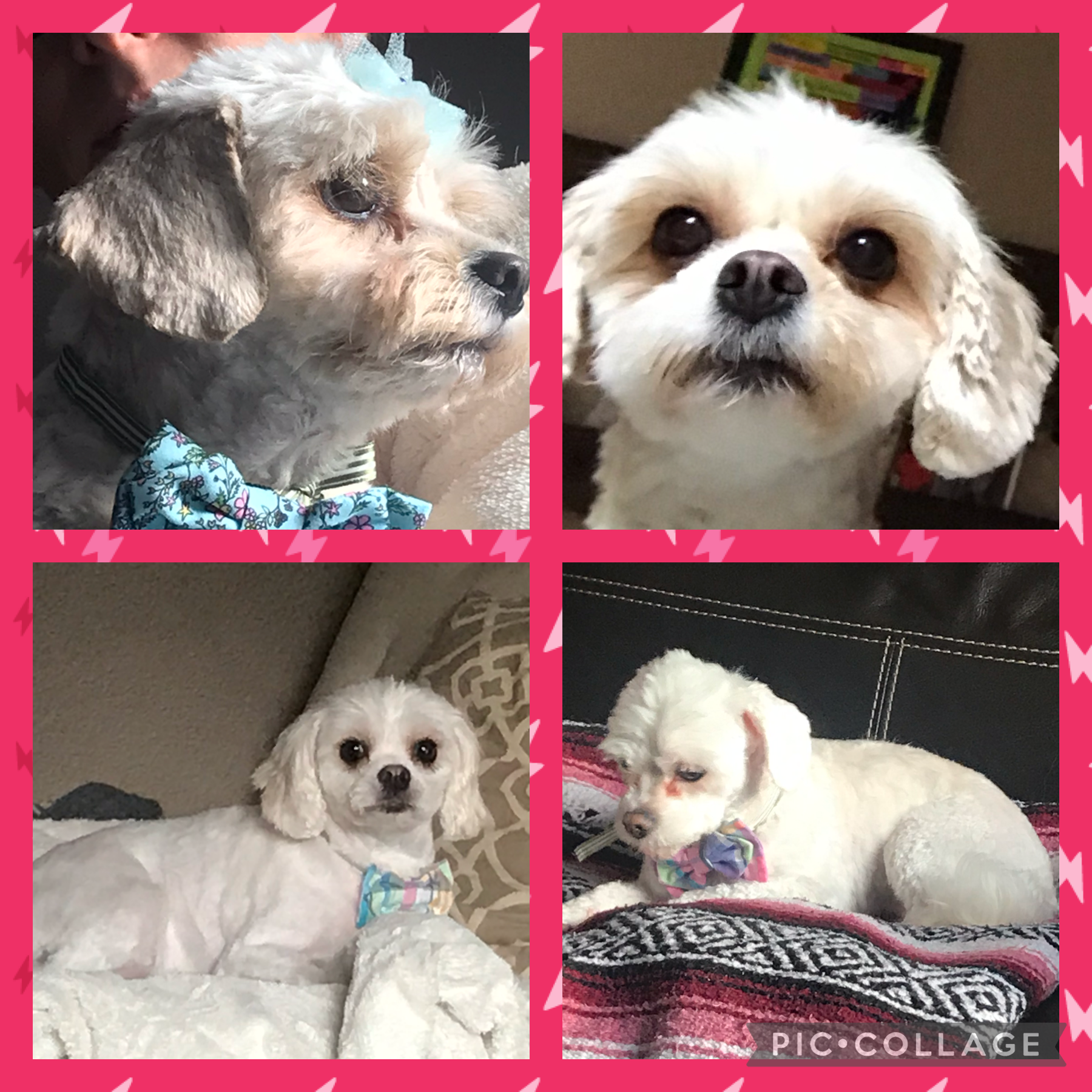 This is Callie, (upper left) Teena (upper right), Julia (lower left), and Holly (lower right)
