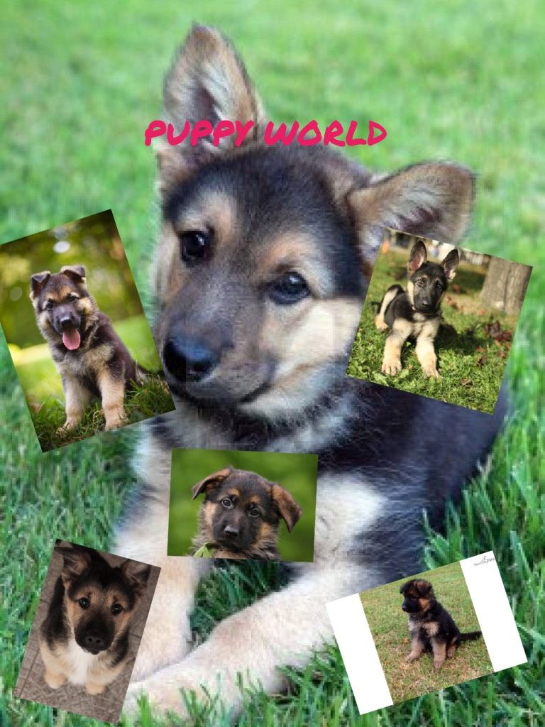 PUPPY WORLD 🌎  I have a dog just like this one
