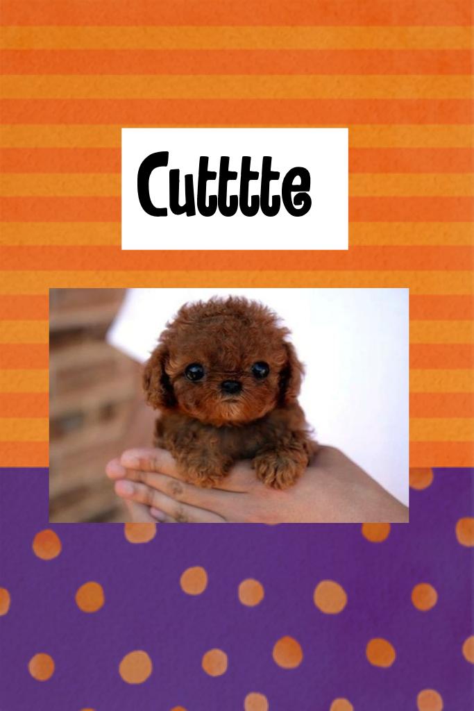 Cutttte little puppy
