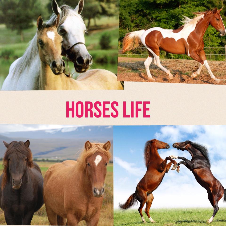 Horses life