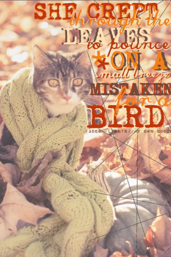First of my new theme! Cats wearing scarves!! 🍂😂😉 Sorry I reposted because the last one had a mistake...