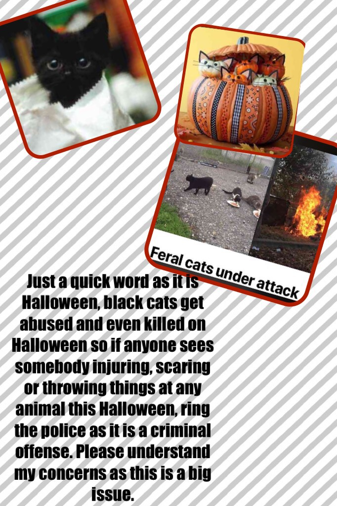 Just a quick word as it is Halloween, black cats get abused and even killed on Halloween so if anyone sees somebody injuring, scaring or throwing things at any animal this Halloween, ring the police as it is a criminal offense. Please understand my concer