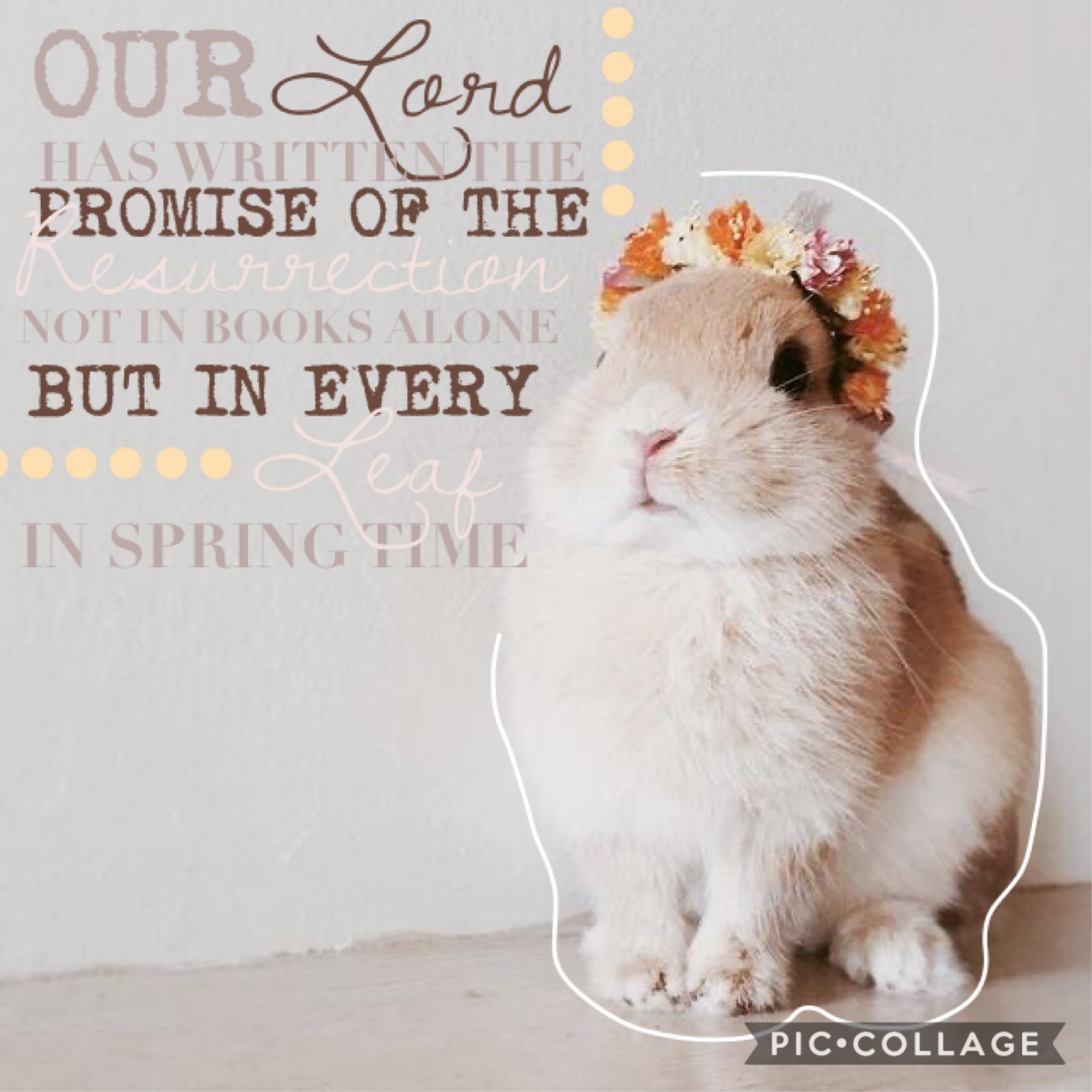 🌷click🌷 Happy Easter everybody! What did y'all get? I got Candy, (I love sponge candy.)  Also this bunny is too cute. :) Qotd: favorite takeout place? Aotd: Subway, Dairy Queen