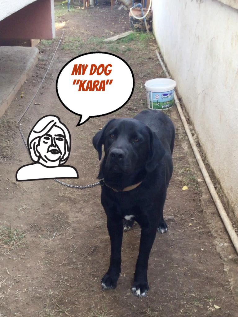 "MY DOG  ""KARA"""