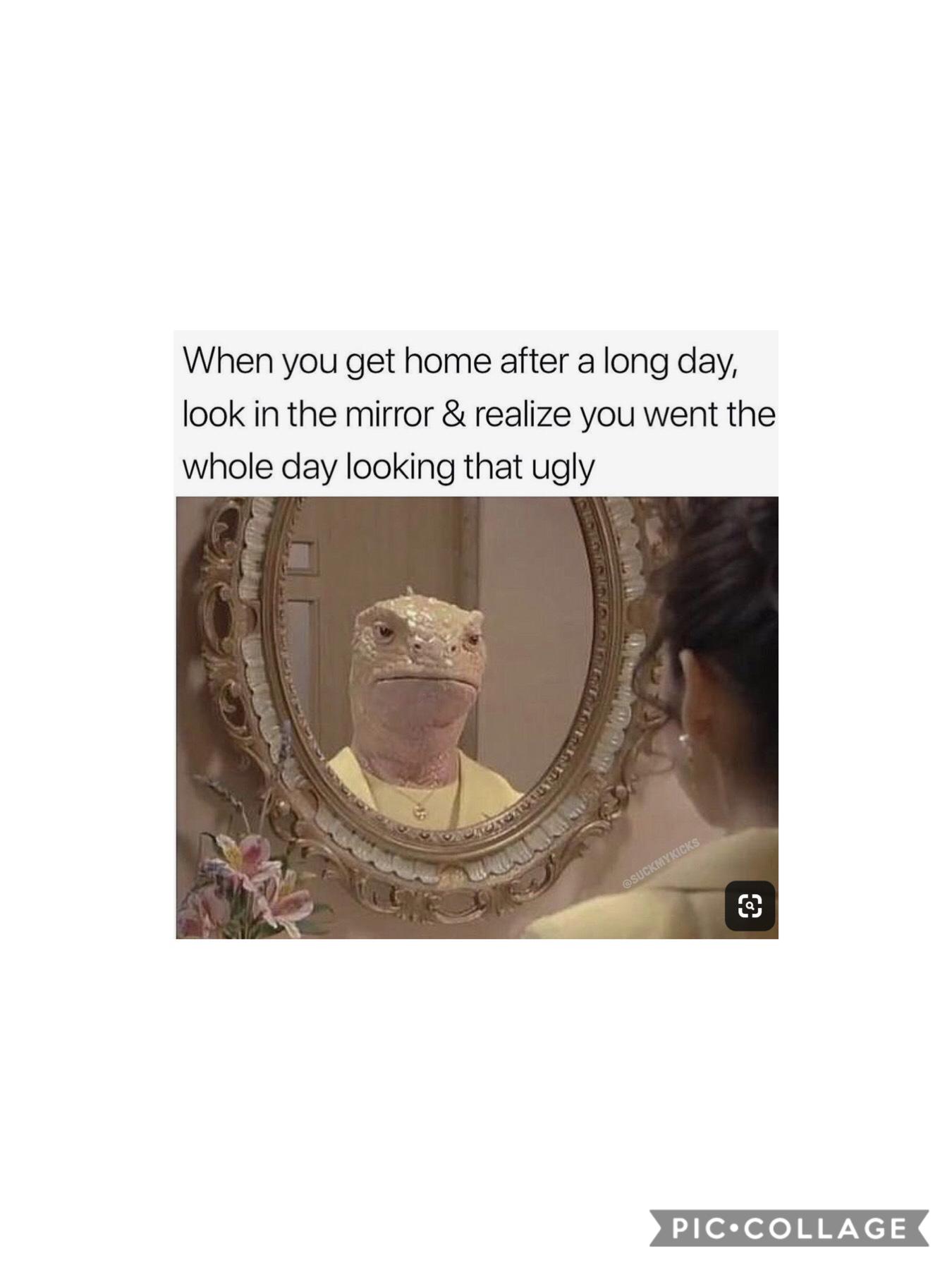daily meme #6