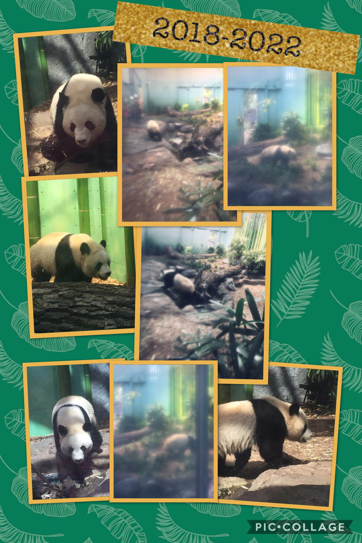 This is one of the new-ish pandas at the Calgary Zoo
