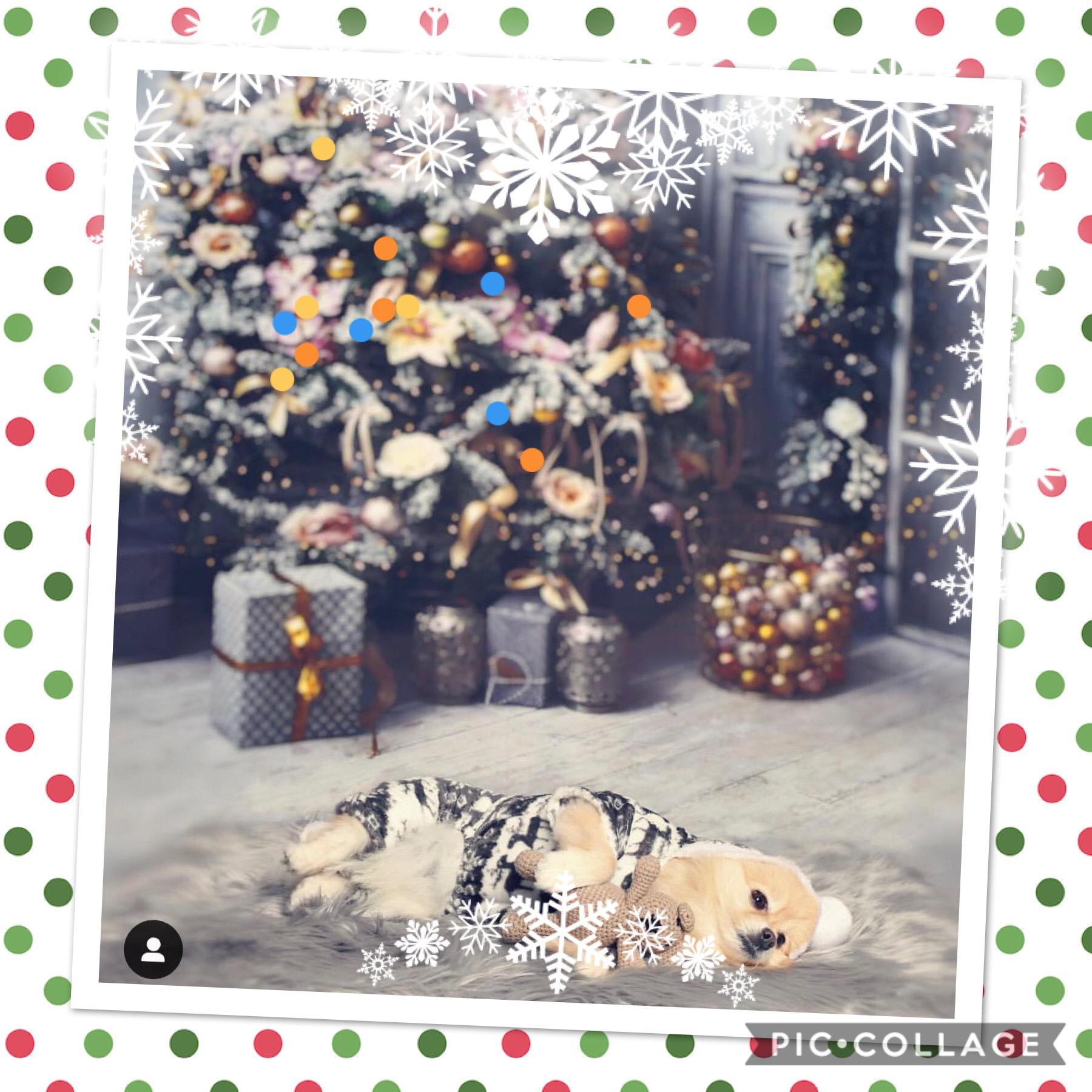 Do pets celebrate the holidays too 🧐