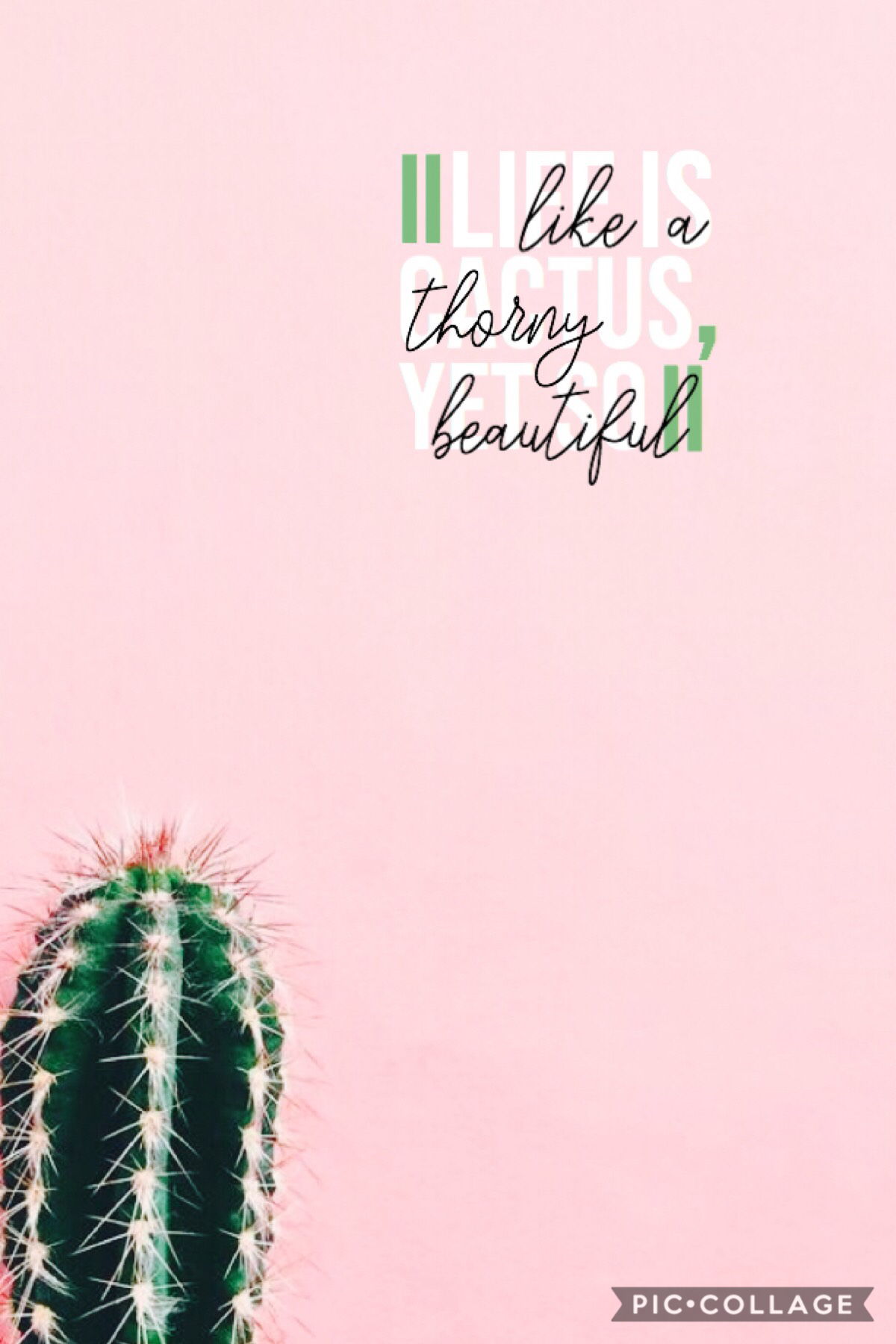 Tap🌵💕  A collage for you guys😂 thinking of trying a new style idk? A cactus is just an aggressive cucumber 🥒😂 I was almost going to use that quote💗💗