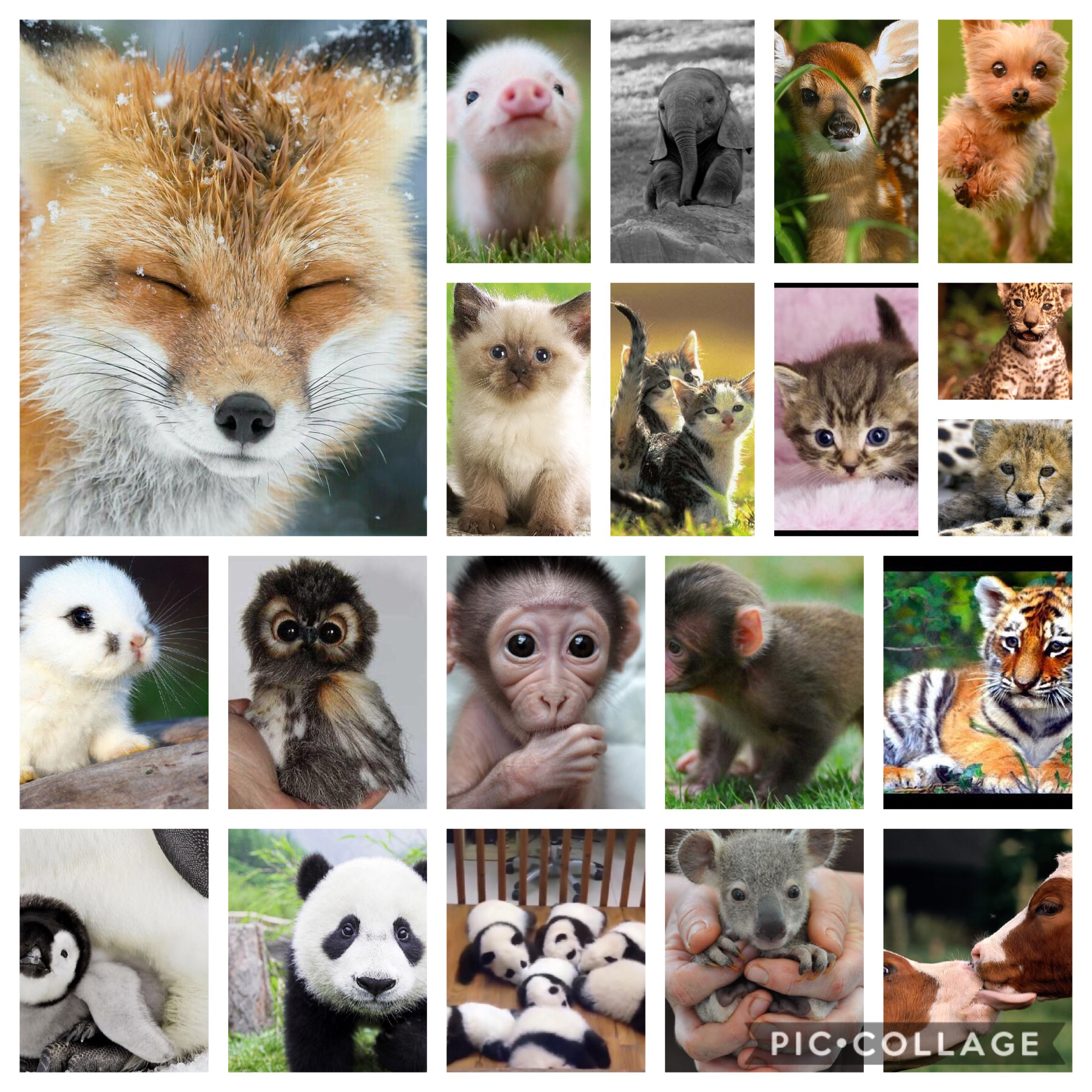 Tap🐶🦊🦁🐱🐼🐰🐨🐯🦁🐮🐷🐵🦉🐘     Witch is your favourite animal out on these  Mine is the fox and the elephant Tap again     What is your favourite animal of all time Mine is an elephant