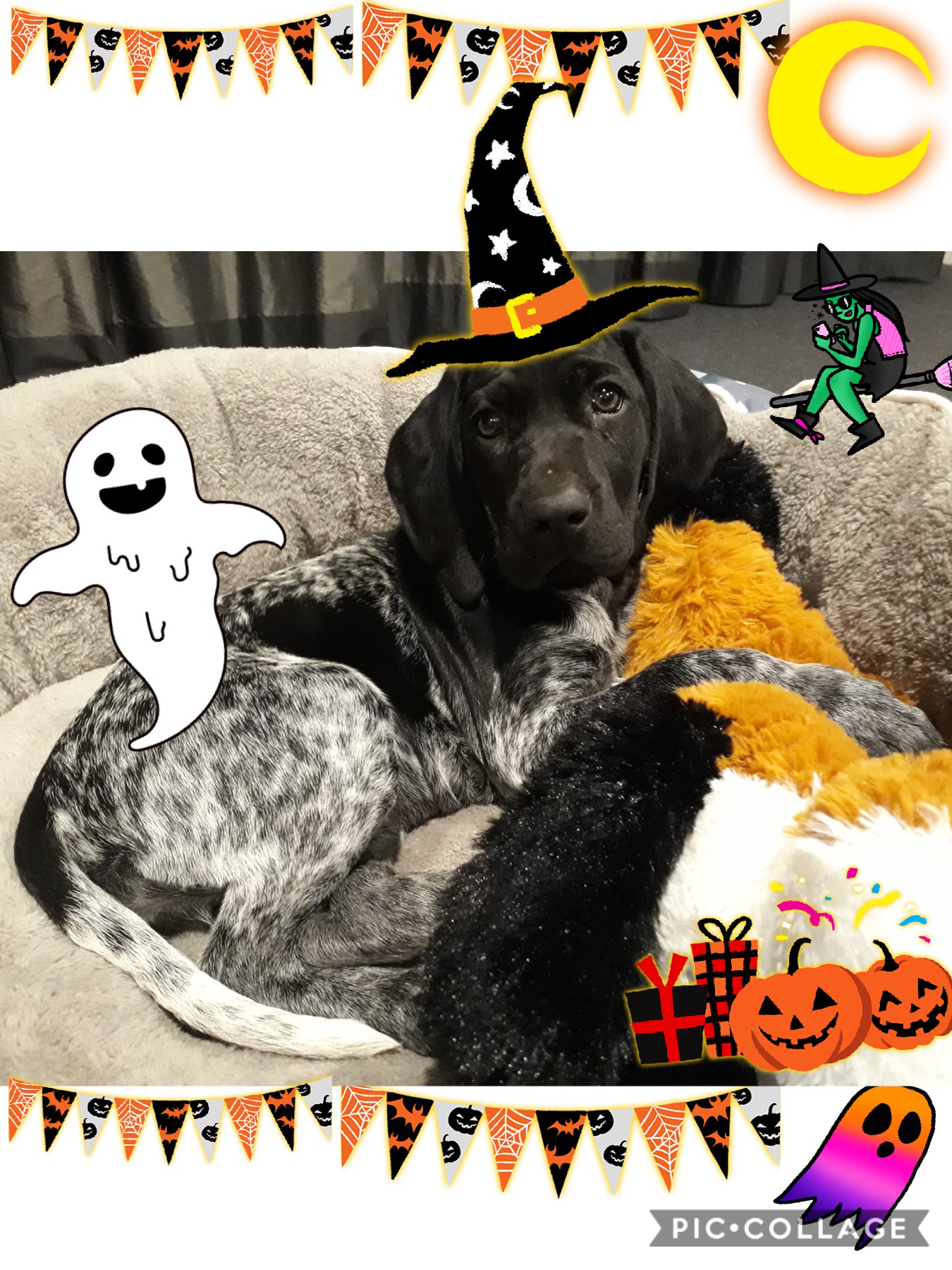 This is my haunted puppy Harley🎃🎃🎃🎃🎃🎃