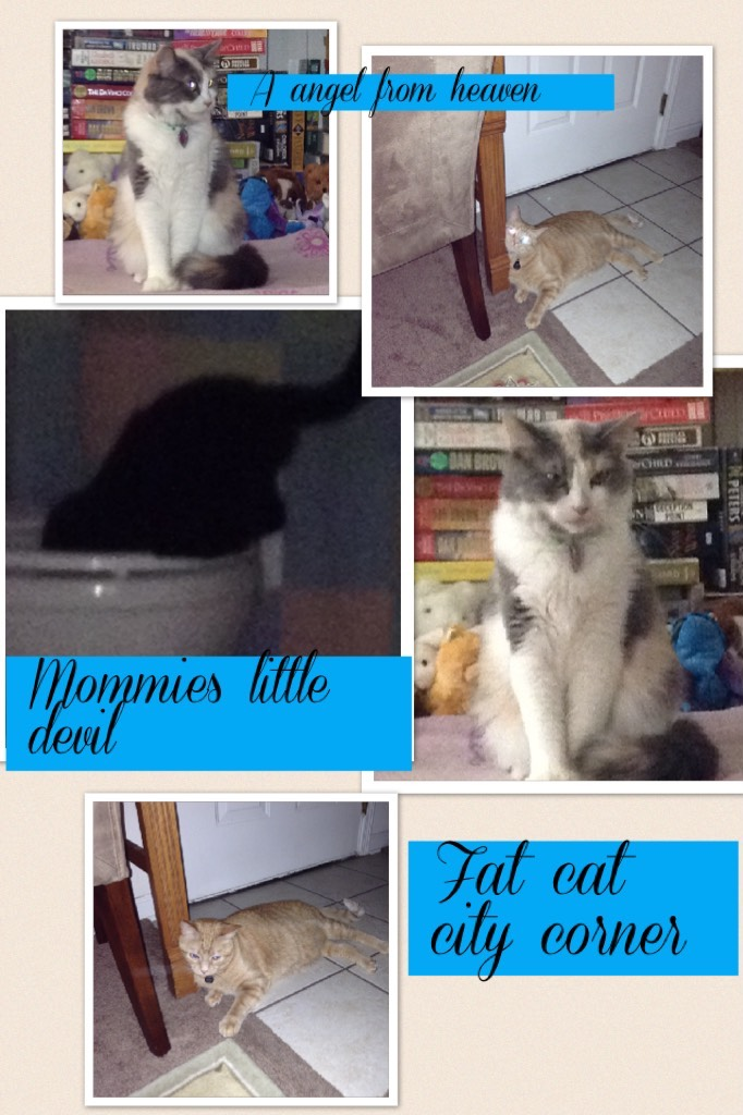 Fat cat city coner