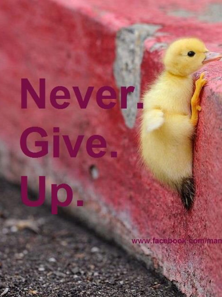 Never give up. Never