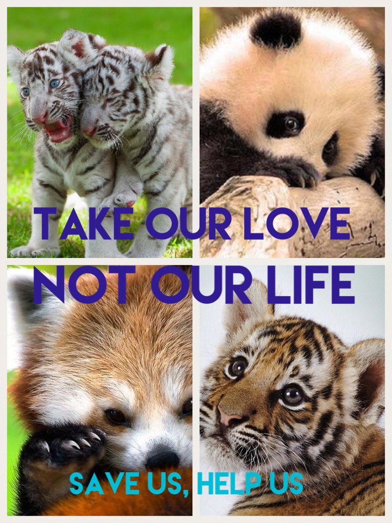Save these adorable animals. And comment and like plz