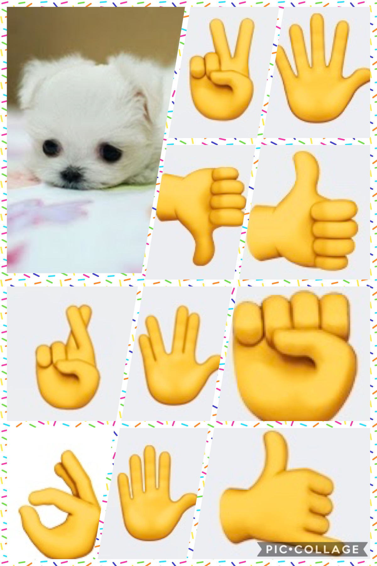 I love hand signs and cute tiny dogs!