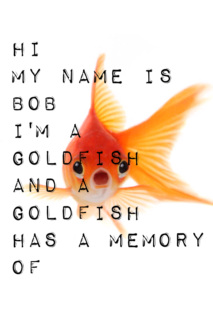 Hi My name is Bob I'm a goldfish  And a goldfish  Has a memory of